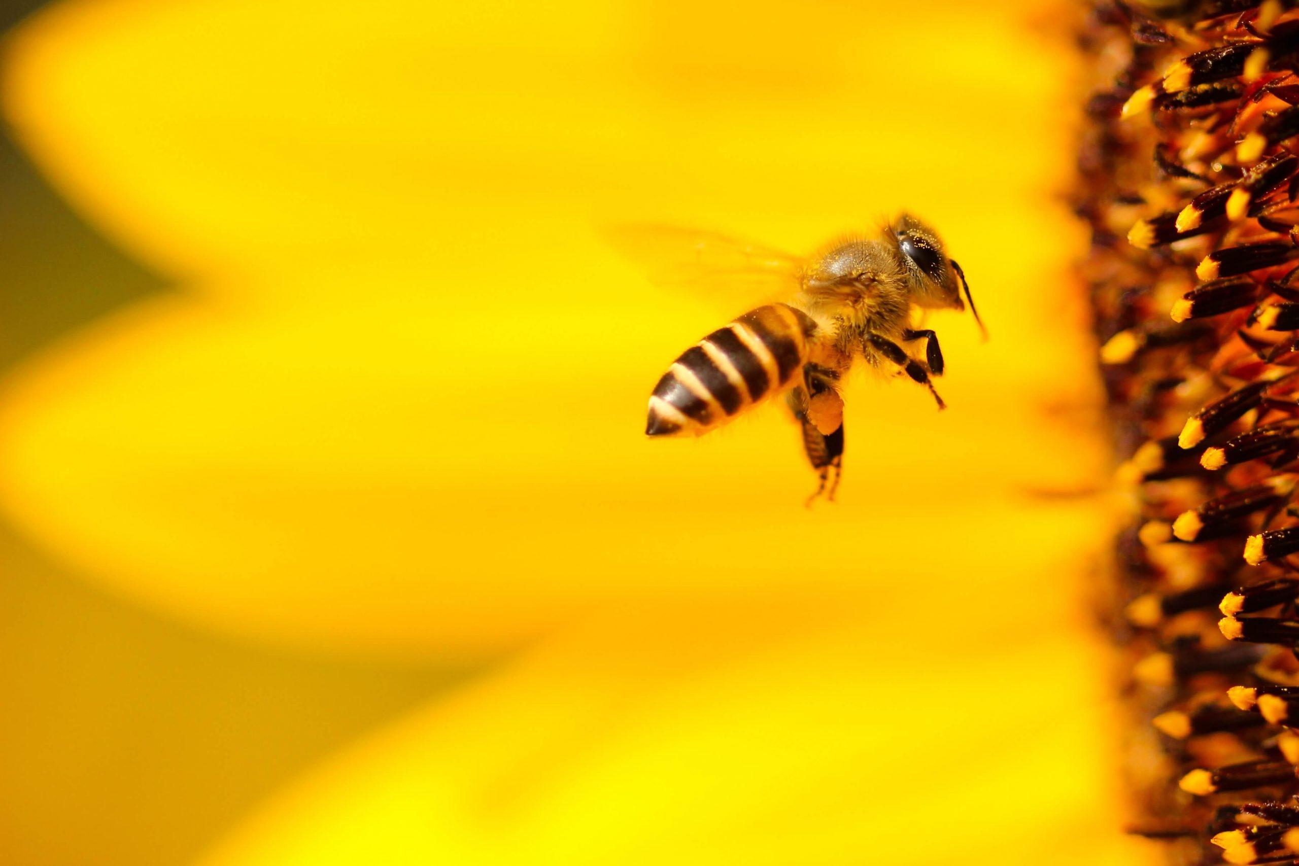 Općenito o pčelama